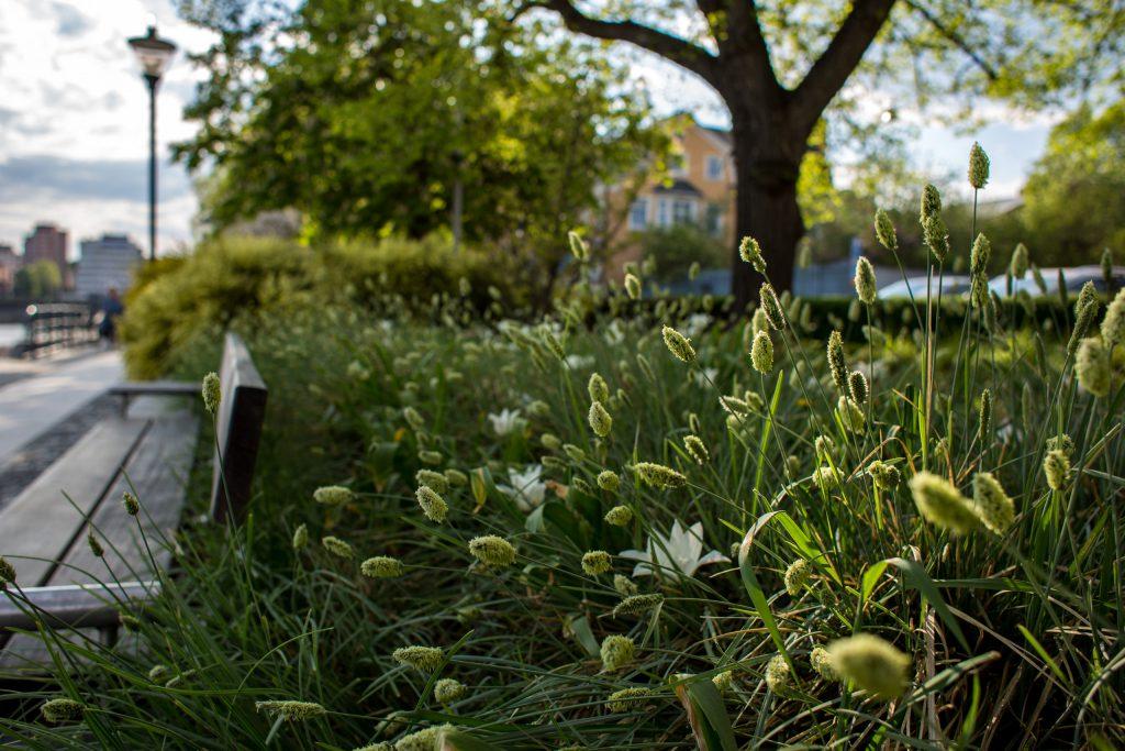 Blommor och gräs