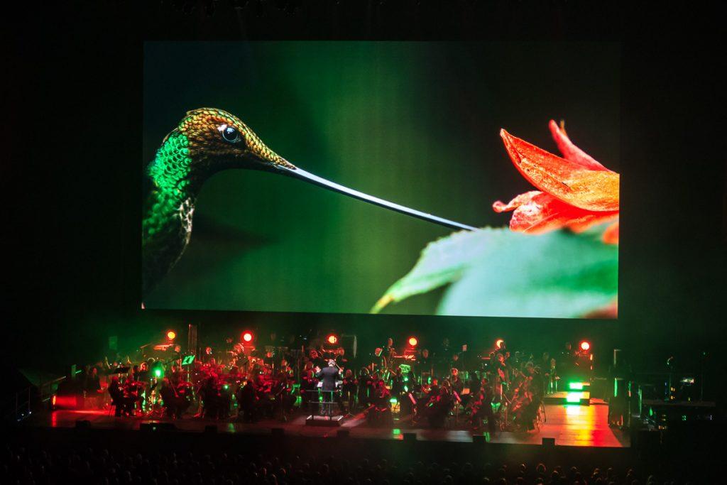 Kolibri med räckvidd på Planet Earth