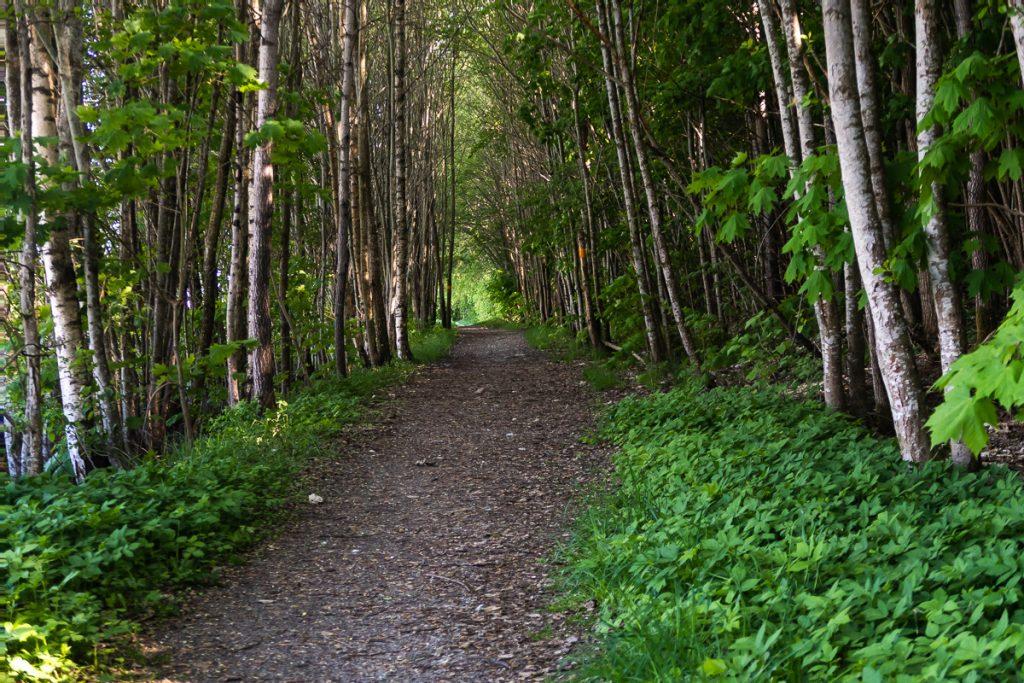 Vandring mellan träd