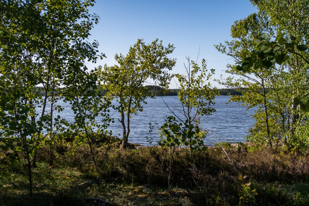 Ensjön genom träd