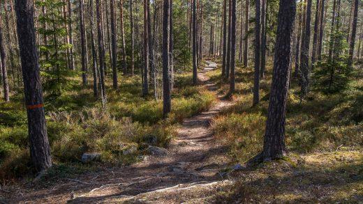 Trail along Sörmlandsleden