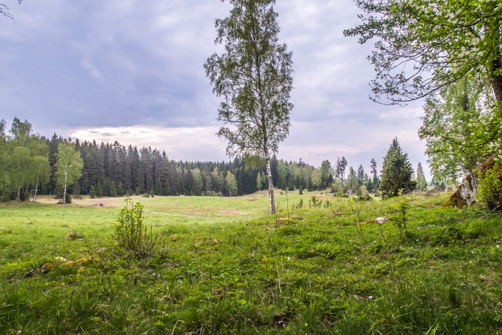Betesmark mellan Hälleforsnäs och Flen