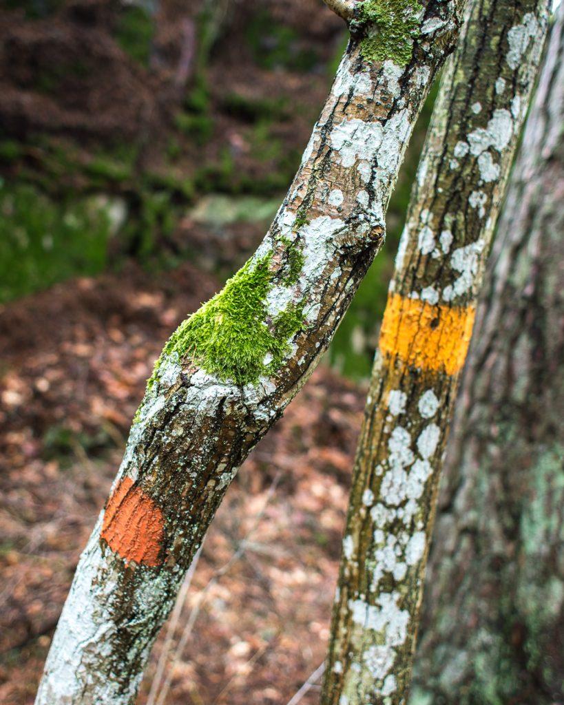 Färgmarkeringar på träd
