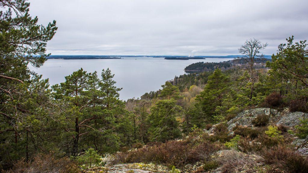 Skog framför utsikt över Bråviken