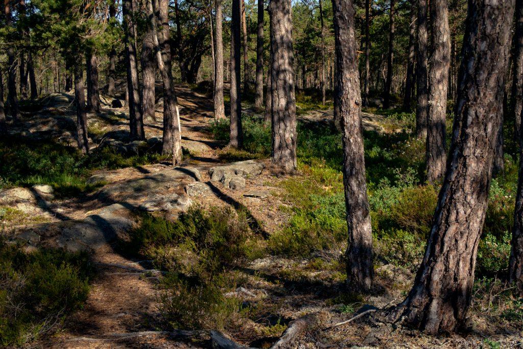 Just keep walking, Sörmlandsleden 23