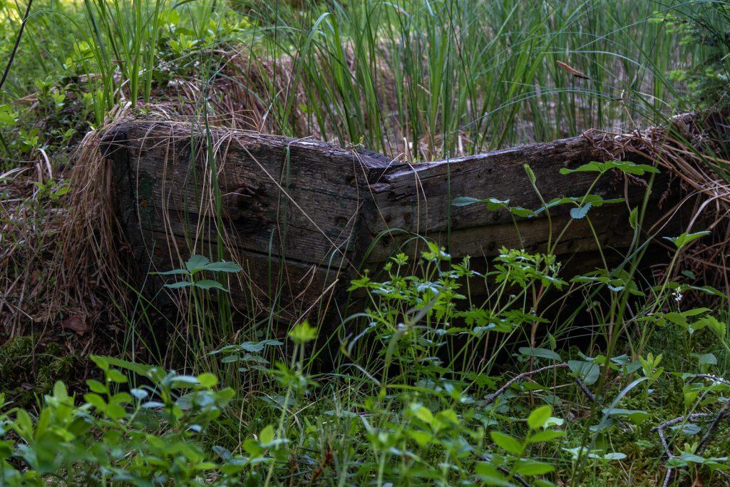 Growing grass, Sörmlandsleden 24