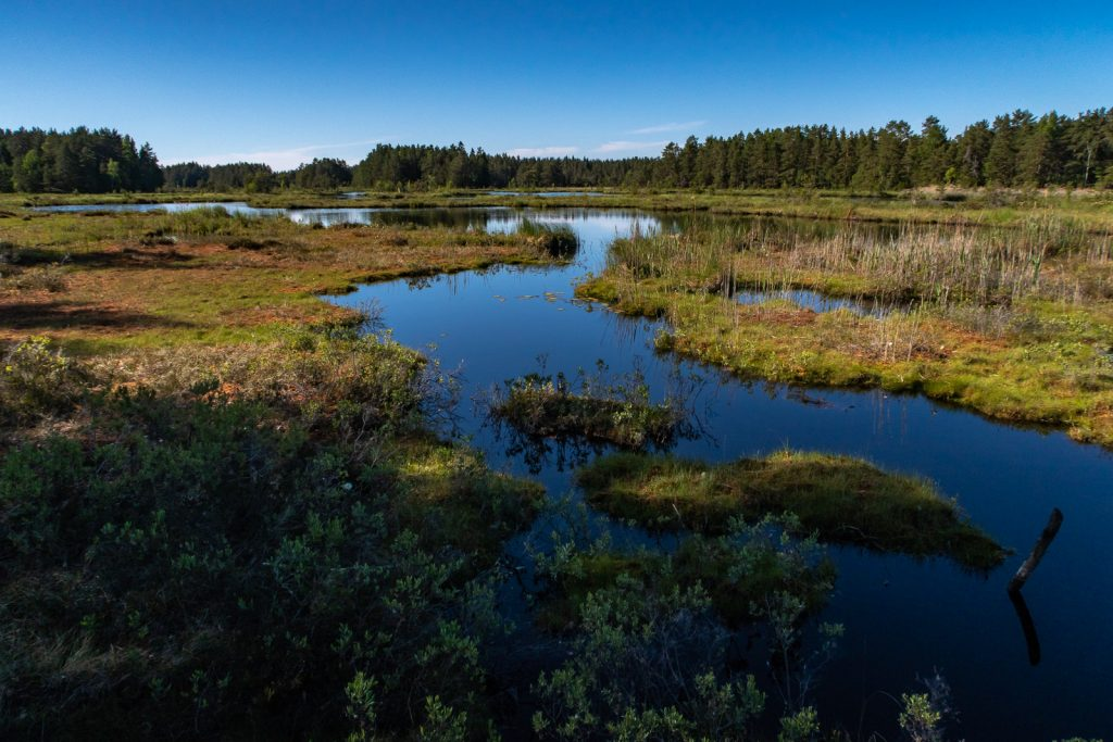 Wetland, Sörmlandsleden 22:1