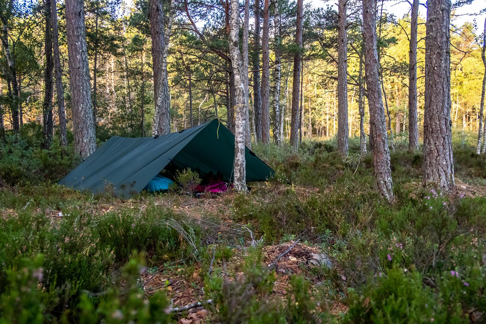 Tarp uppsatt som ryggåstält i skog.