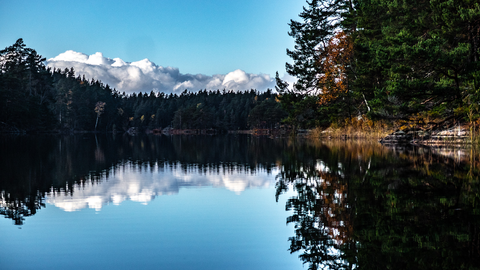 Spegelblank sjö med moln bakom skog