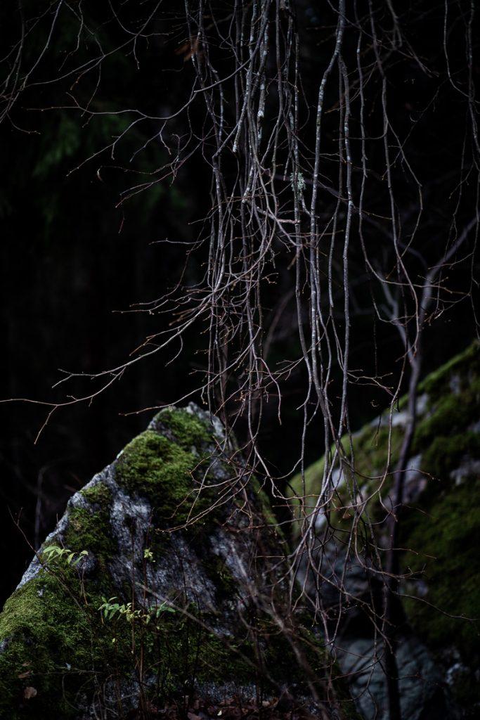 Trollsk grenar hänger ner