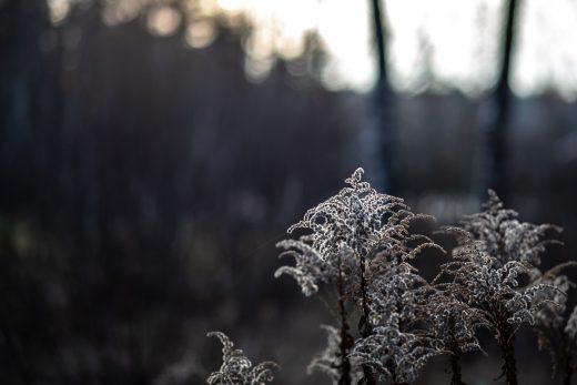 Vintriga färger på senhösten