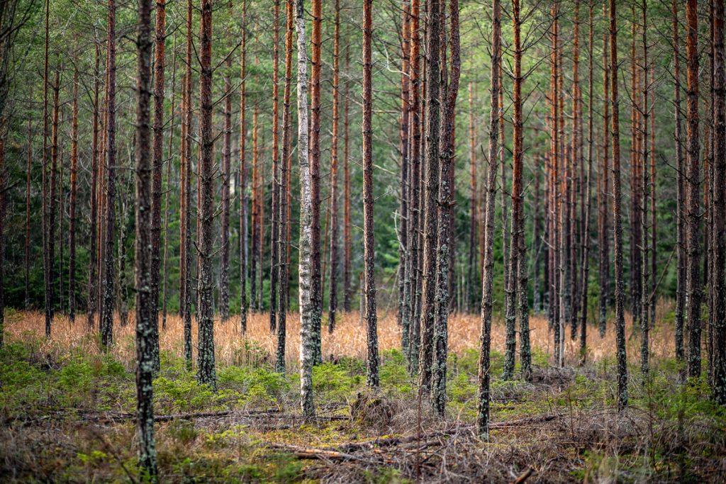 Smala träd