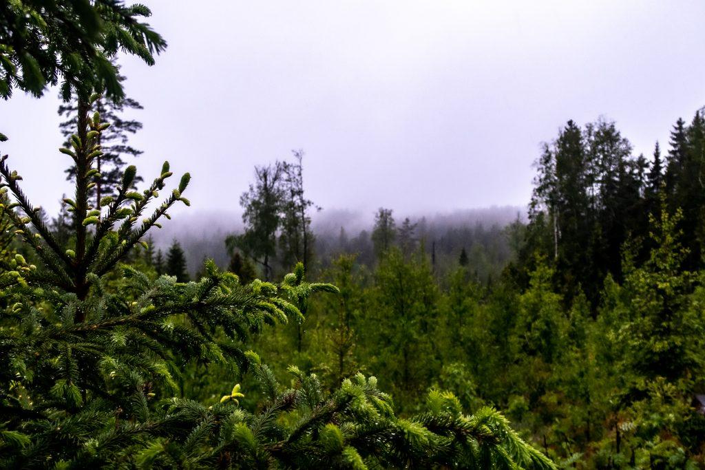 Regnblöt skog längs Bergslagsleden