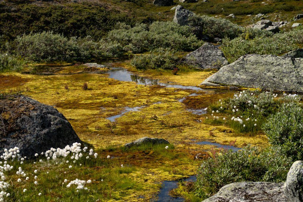 Vacker våtmark längs Kungsleden