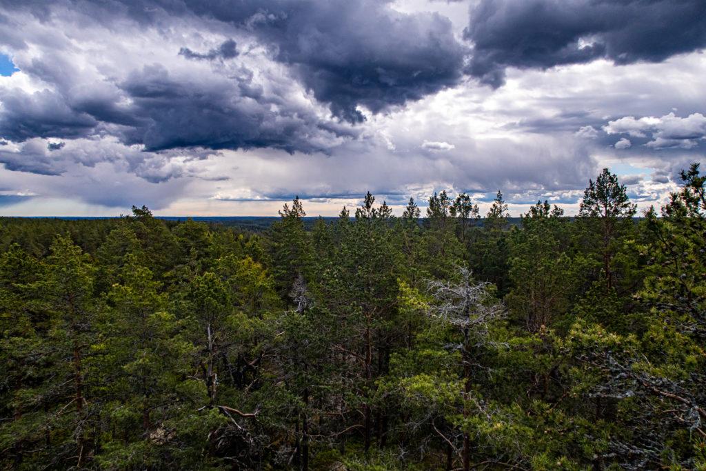 Utsikt över skog från utsiktstornet på etapp 30 längs Sörmlandsleden