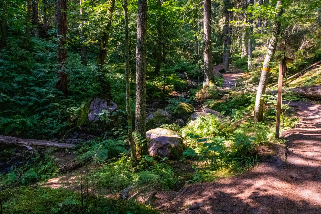 Getåravinen norr om Norrköping