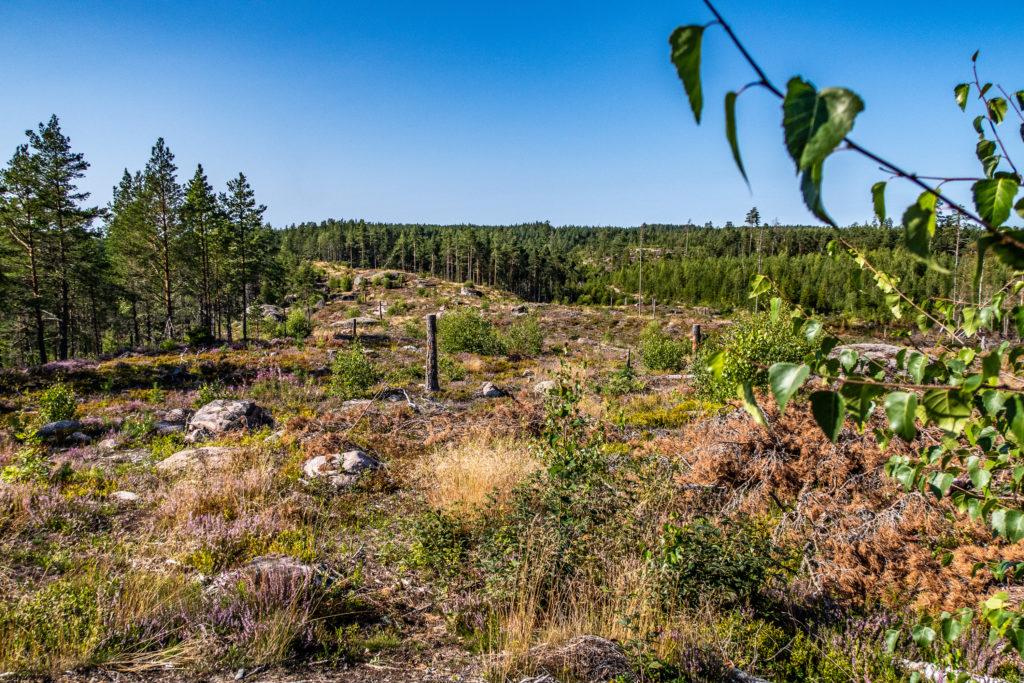 Avhuggna träd visar ledmarkeringar för vandring