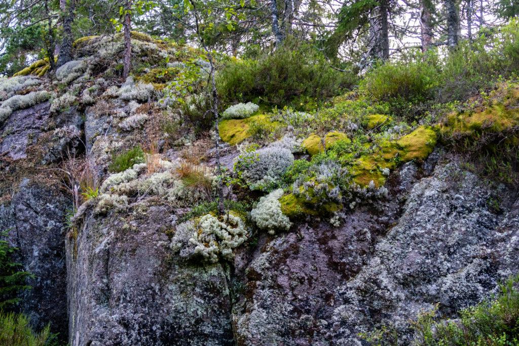 Mossig sten i skog längs Bergslagsleden
