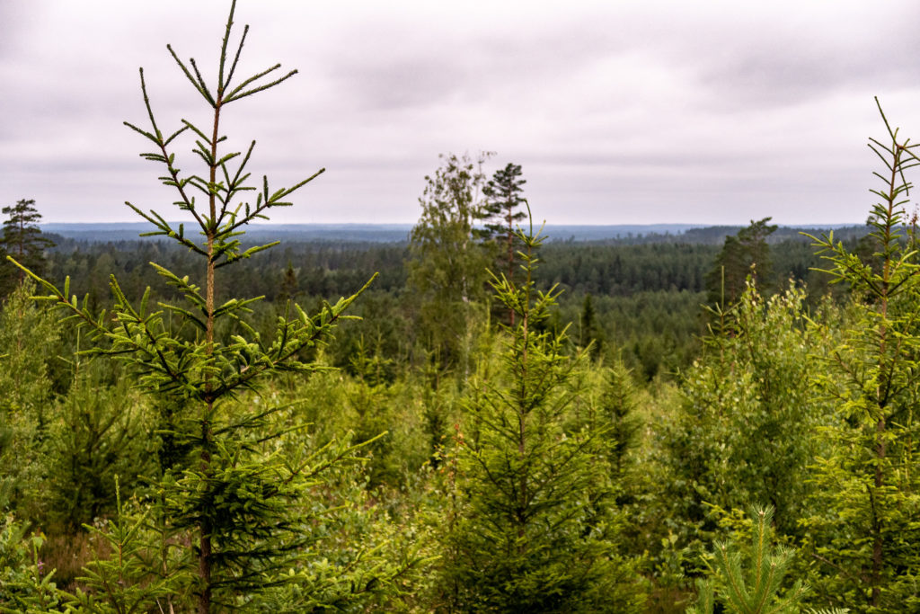 Utsikt över skog en mulen dag