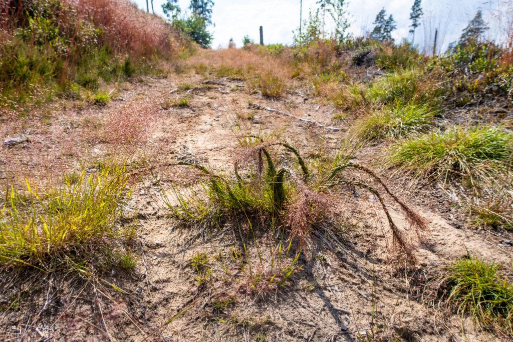 Långt gräs som växer mitt på Bergslagsleden har blivit flätat