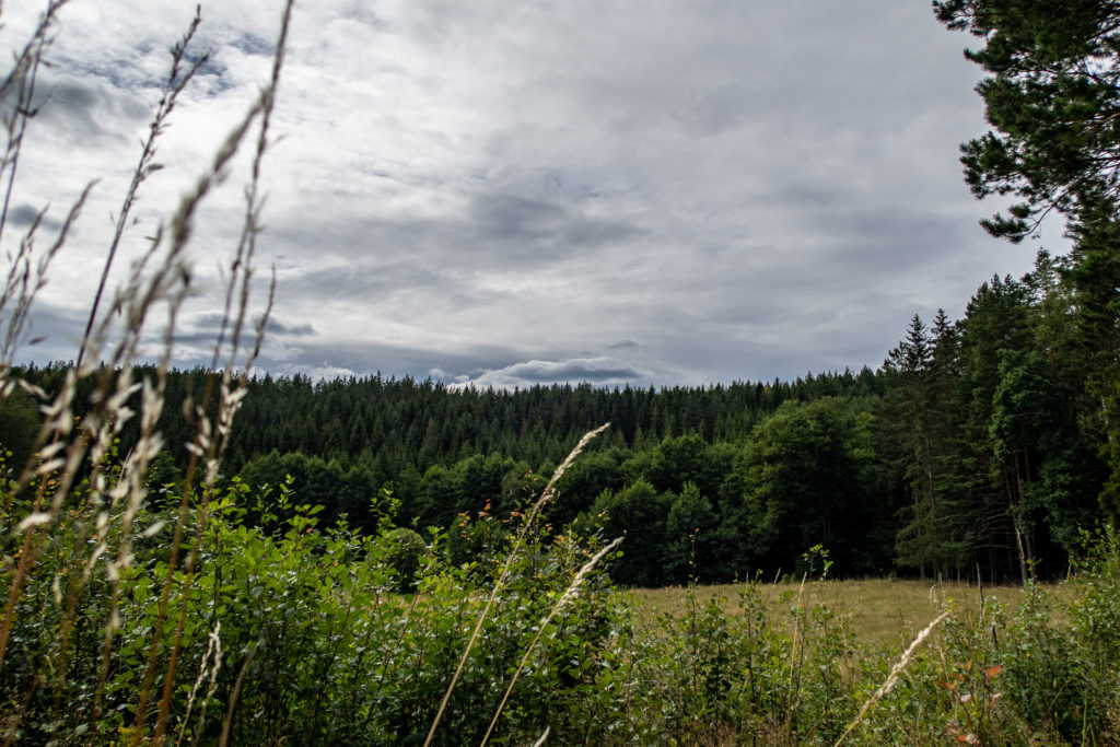 Molnig himmel över fält