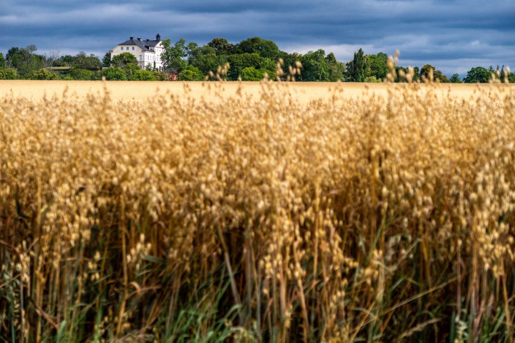 Stegeborgs Egendom