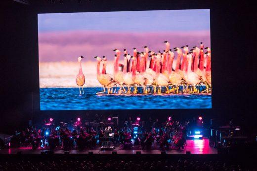 Flamingodans på Planet Earth