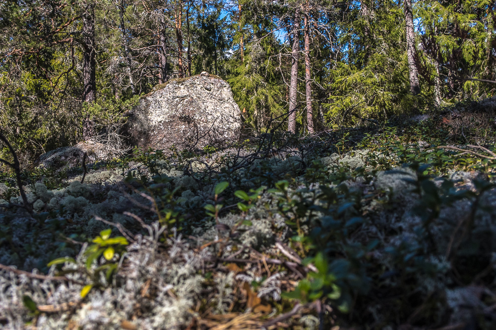 Skog vid Bärsjön