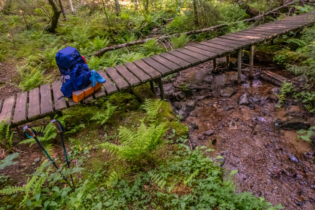 Bäck i skogen