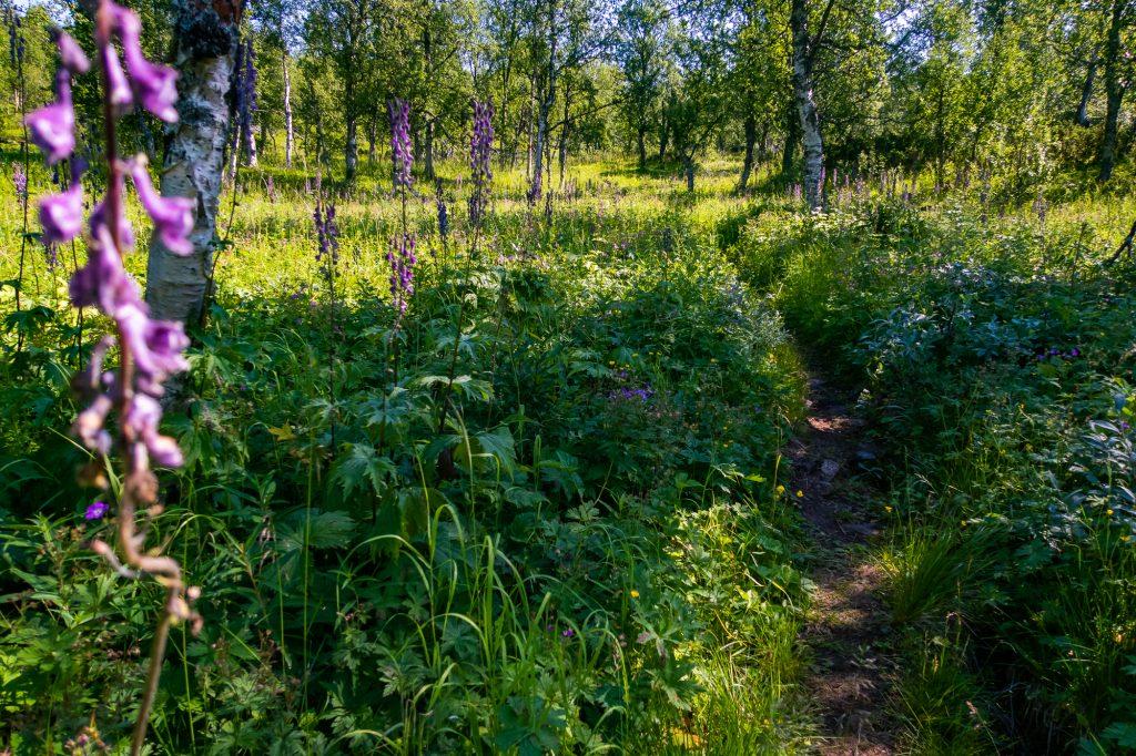 Grön stig kantad av blommor