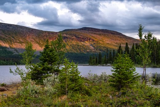 Utsikt över Laponiaskogar