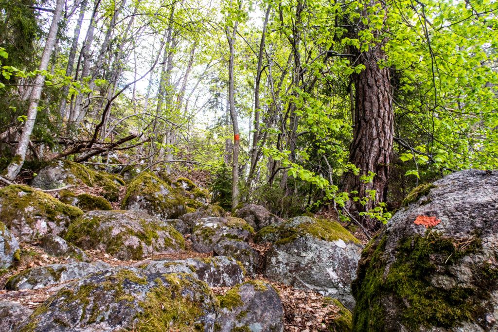Sörmlandsleden längs Bråviken