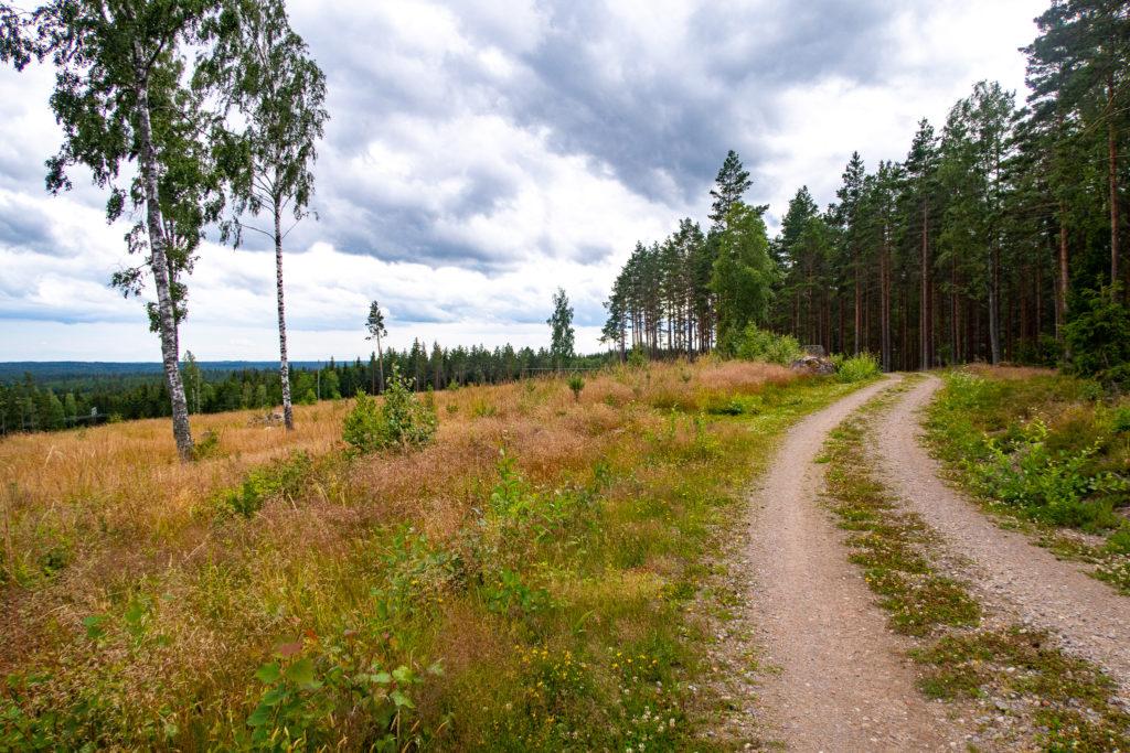 Grusväg med kalhygge och skog längs Begslagsleden