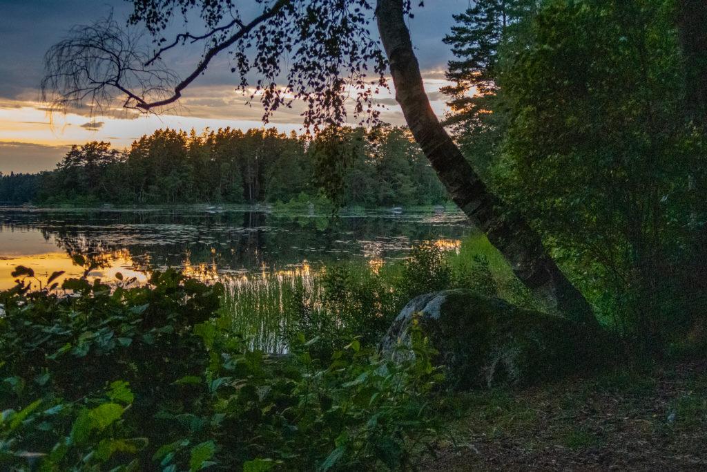 Bosjön i skymningsljus