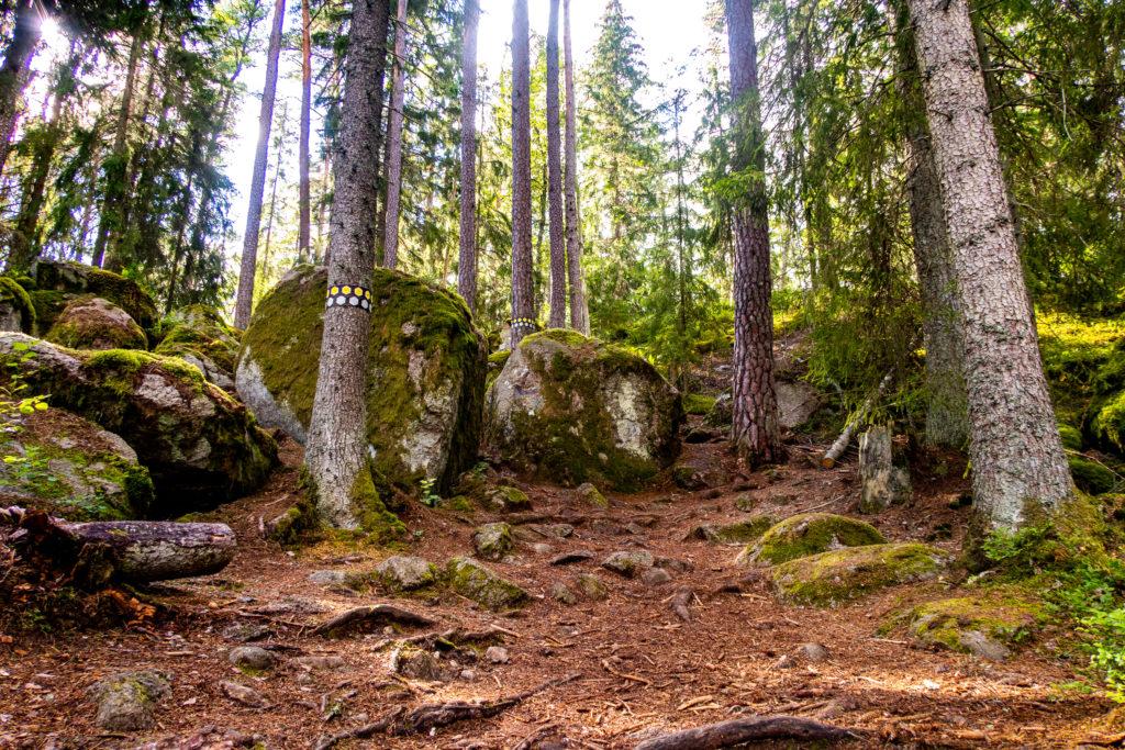 Stigmarkering för gul och grå led i Tivedens nationalpark