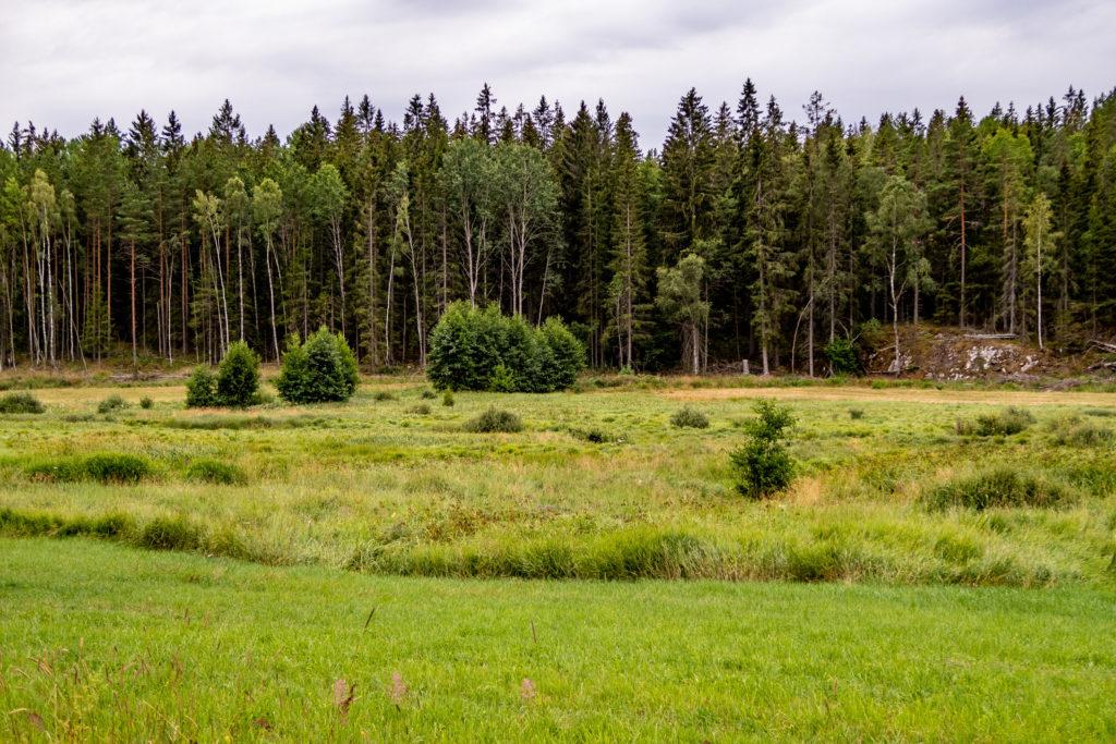 Övrig mark vid skog