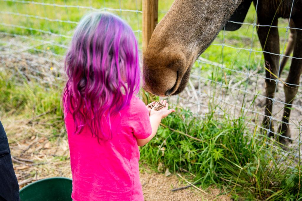 Barn matar älg i älgpark