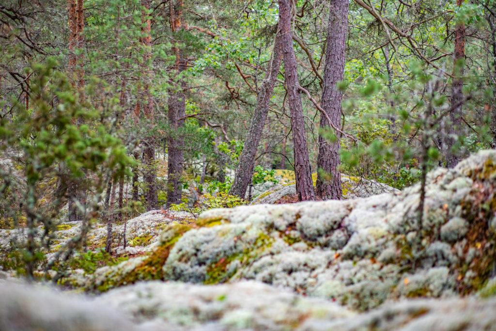Mossa i skogen