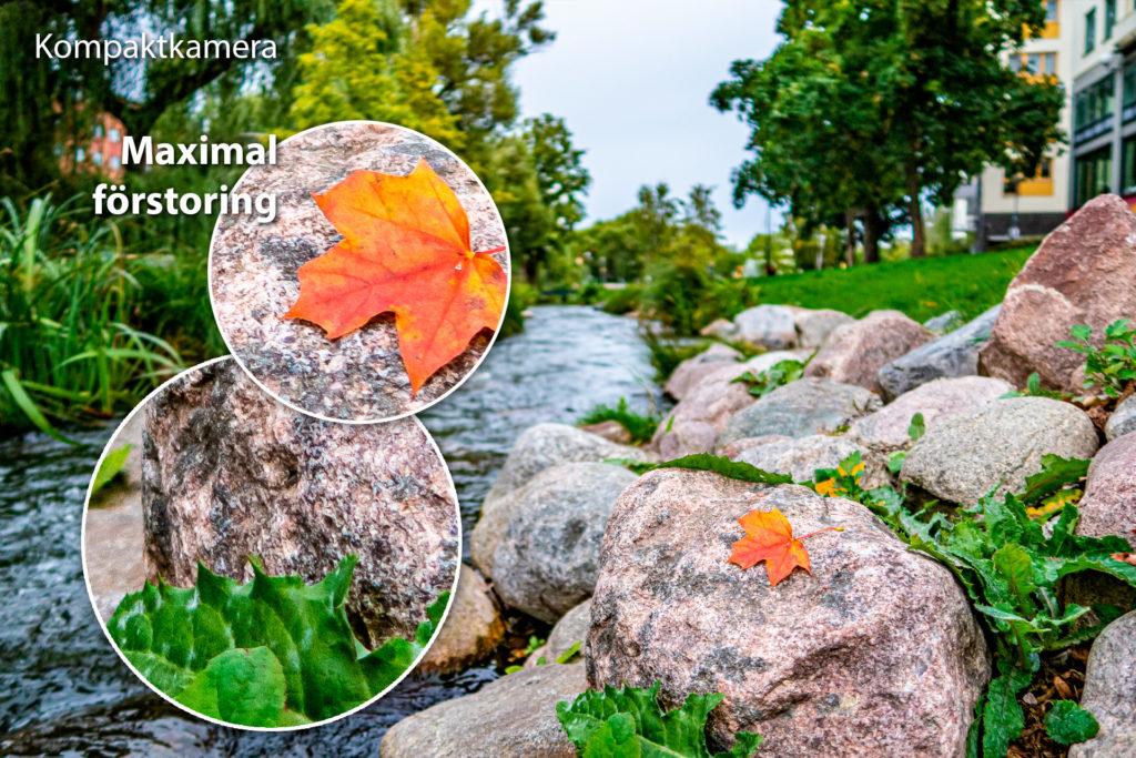 Höstlöv fotat på sten med kompaktkamera