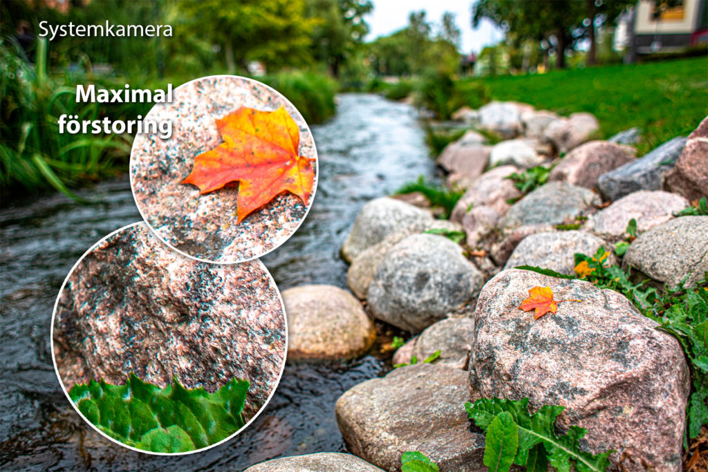 Höstlöv fotat på sten med systemkamera