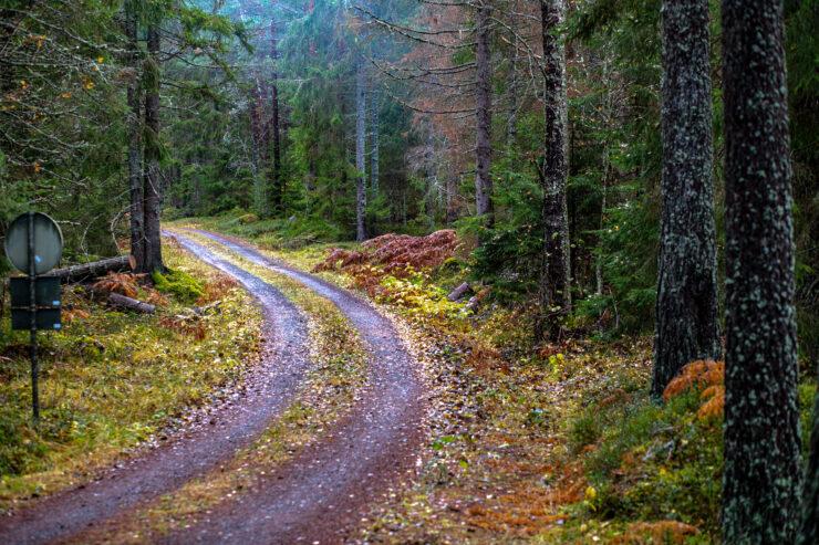 Enkel väg genom lummig skog