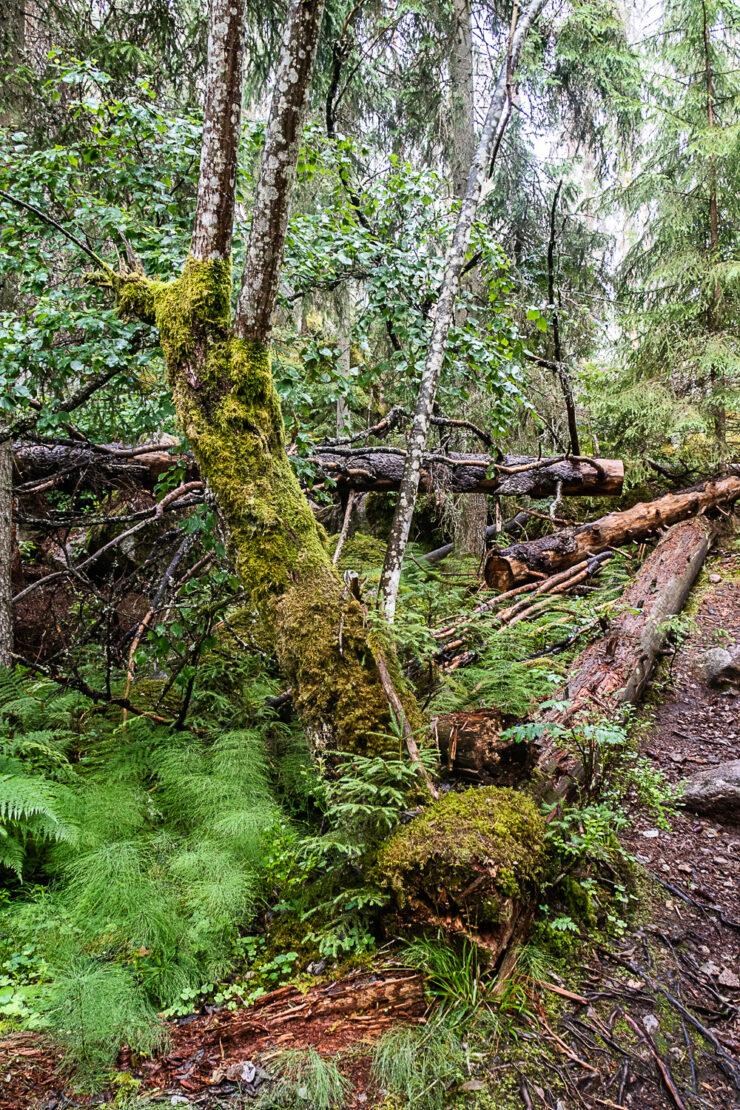 Huller om buller i Norra Kvills nationalpark