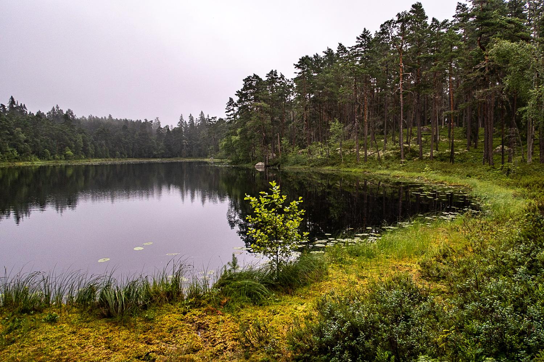 Utsikt över Stora Idgölen i Norra Kvills nationalpark