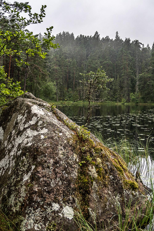 Dimman lättar vid Stora Idgölen i Norra Kvills nationalpark