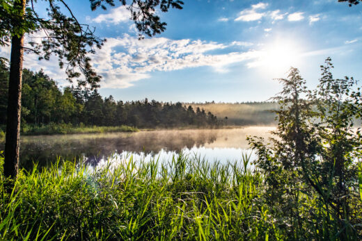 Solen går upp en dimmig morgon i Hökensås
