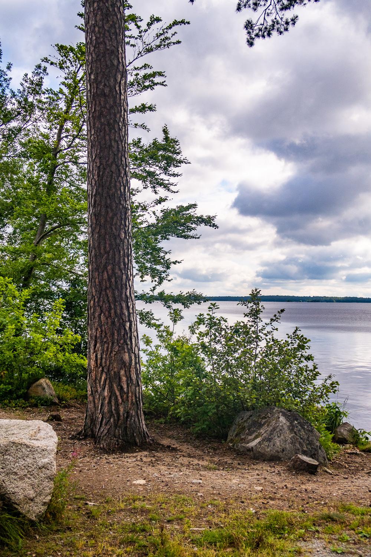 Utsikt över sjön i Åsnens nationalpark