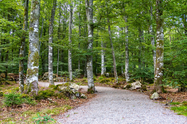 Bokskog i Åsnens nationalpark