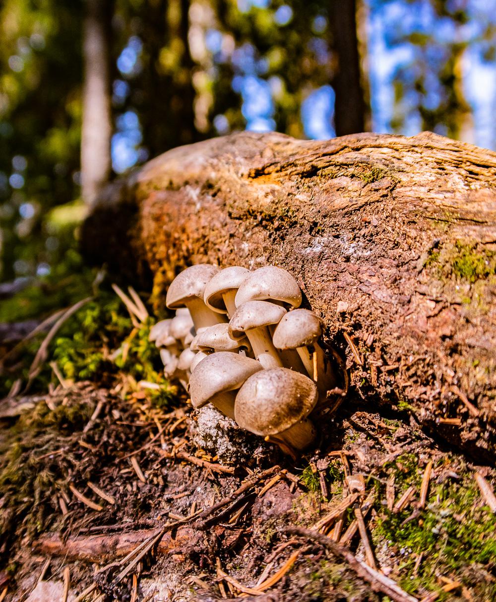 Småsvamp växer vid fallen trädstam