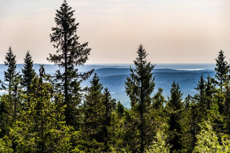 Utsikt från Kindlahöjden i Kindlas naturreservat