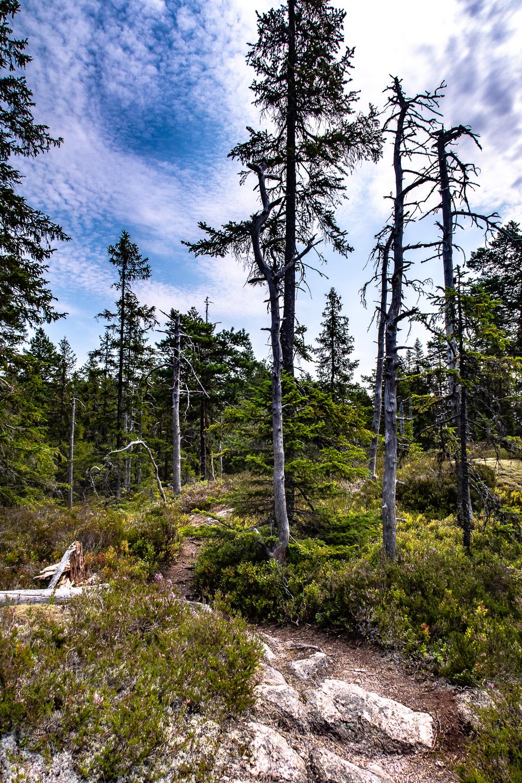 Vandring i Kindla naturreservat
